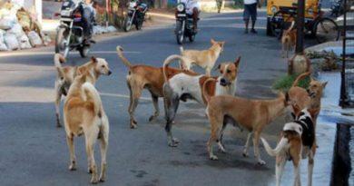 रेबीज लसीअभावी कुत्री हिंसक